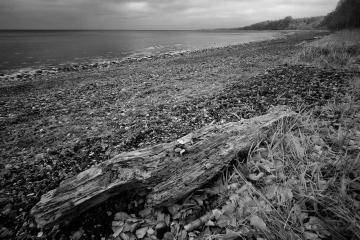Ostseeküste am Waldrand von Nørreskov auf der dänischen Insel Als © Holger Rüdel