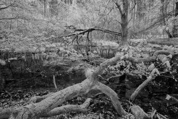 Im Naturschutzgebiet Heilige Hallen © Holger Rüdel