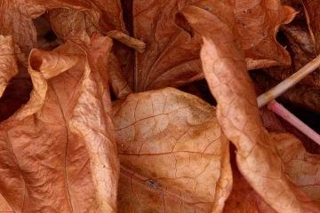 Herbstlaub Nikon D610 Ausschnitt © Holger Rüdel