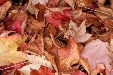 Herbstlaub Nikon D610 © Holger Rüdel