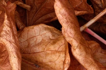 Herbstlaub Nikon D810 Ausschnitt © Holger Rüdel