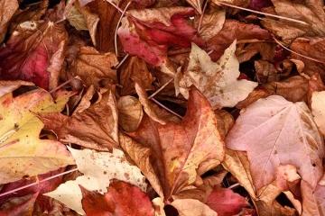 Herbstlaub Nikon D810 © Holger Rüdel