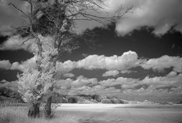 Landschaft am Selker Noor © Holger Rüdel