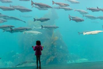 Im Aquarium Atlantikpark Ålesund © Holger Rüdel
