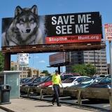 Plakat gegen die Wolfsjagd in Minnesota (USA) © Holger Rüdel