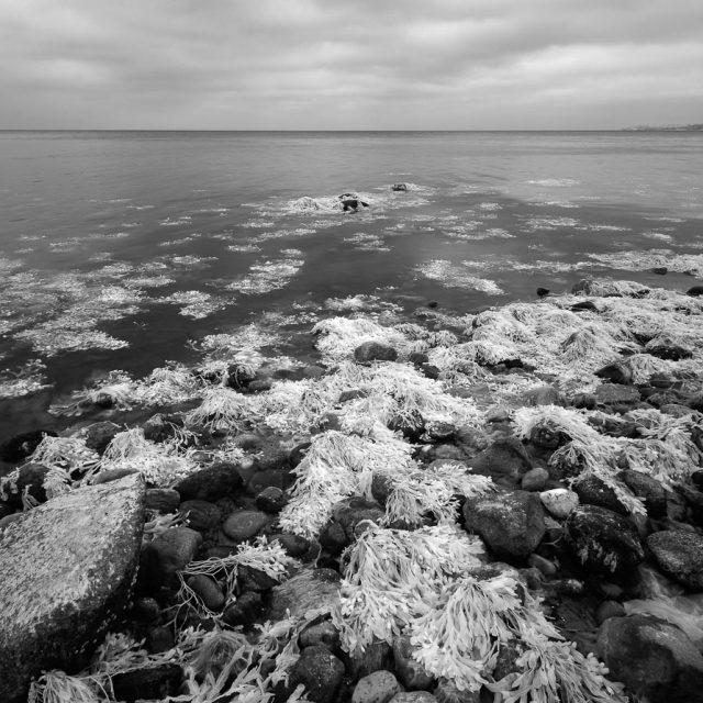 Ostseeküste am Rand des Waldes Nørreskov an der Ostküste der Insel Als in Dänemark. Die Aufnahme entstand mit einer für monochrome Infrarot-Fotografie umgebauten Nikon D700.
