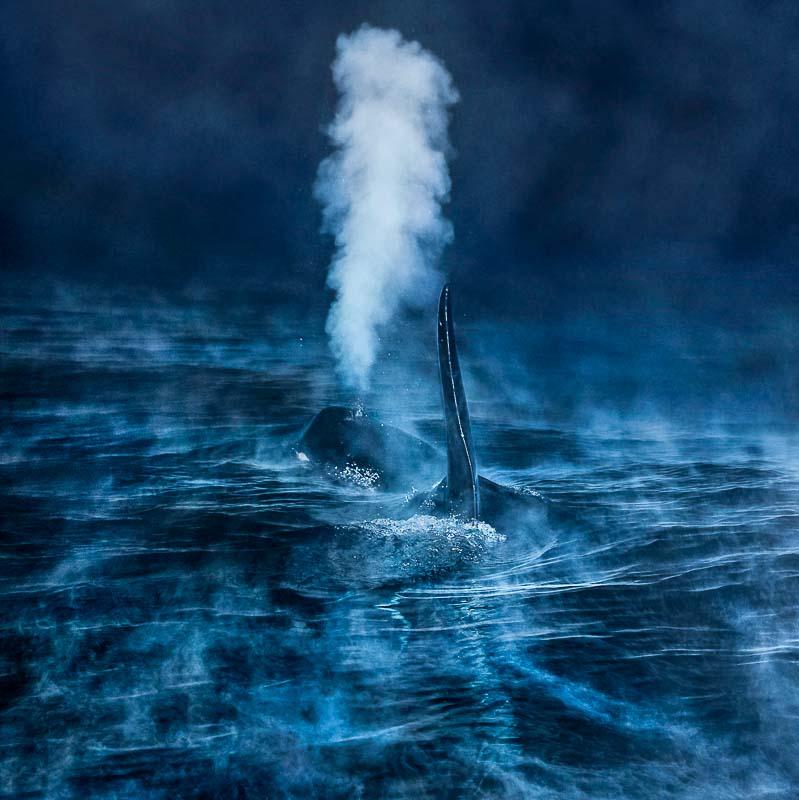 Audun Rikardsen, Norwegen: Ein Atemzug in der Polarnacht