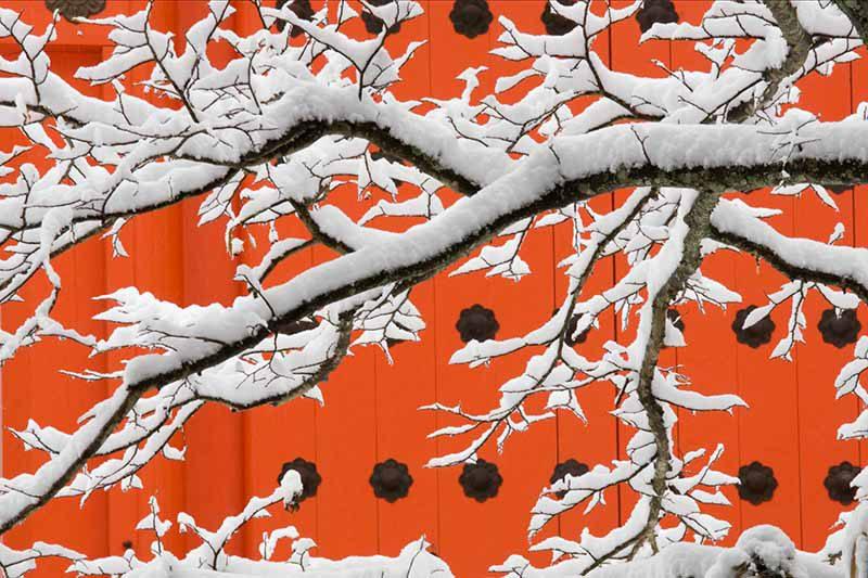 Kōyasan Shingon Temple, Wakayama Prefecture, Japan © Art Wolfe / Art Wolfe Stock