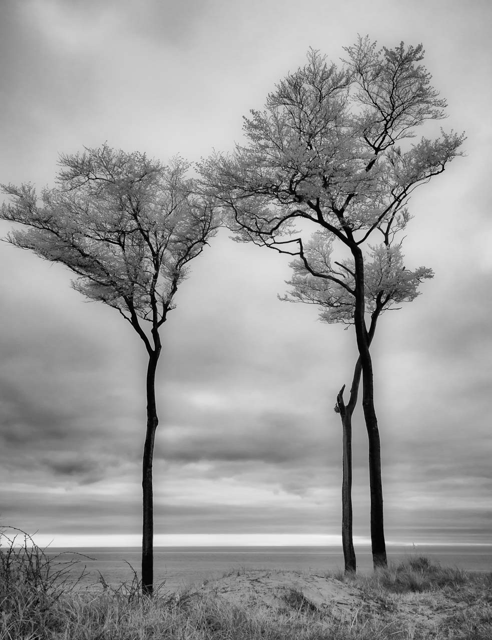 Drei markante Bäume an der Darß-Westküste