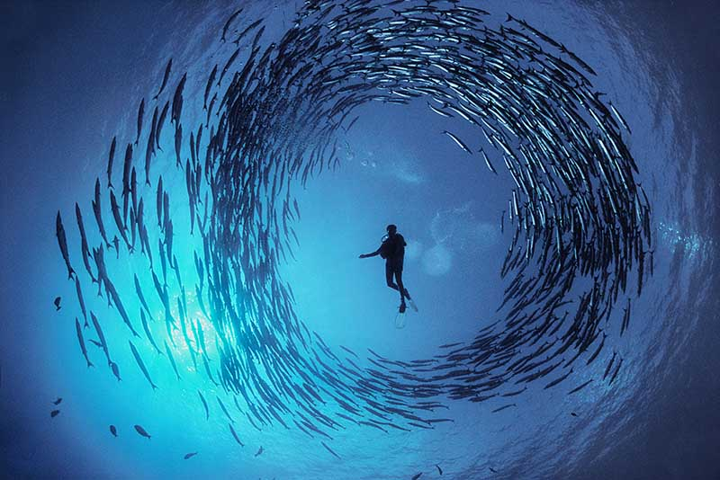 Circle of Barracuda © David Doubilet / Undersea Images, Inc.