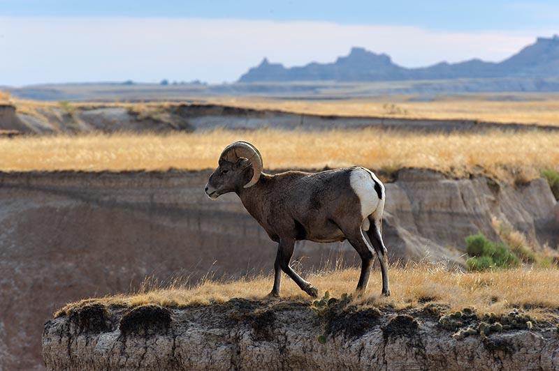 Mit Jim Brandenburg im Badlands National Park in South Dakota (USA)