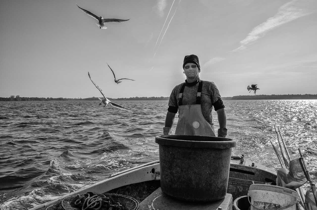 Matthias Nanz aus Schleswig ist einer der letzten Berufsfischer an der Schlei. Bei seinen Fangfahrten - hier Ende Mai auf der Großen Breite der Schlei - sind hungrige Möwen häufige Begleiter.