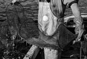 Matthias Nanz aus Schleswig ist einer der letzten Berufsfischer an der Schlei. Invasionen von Rippenquallen wie hier Im Spätsommer 2019 sind eine neue Herausforderung für ihn und seine Kollegen. Die Reusen sind mit Quallen verstopft. Der Fischfang kommt zum Erliegen.