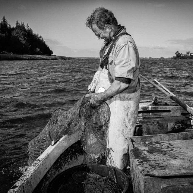 Matthias Nanz – ein Fischer an der Schlei: Quallenalarm