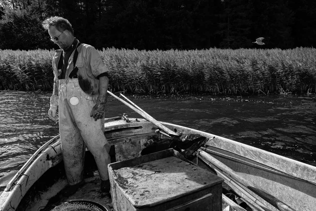 Matthias Nanz aus Schleswig ist einer der letzten Berufsfischer an der Schlei. Invasionen von Rippenquallen wie hier Im Spätsommer 2019 sind eine neue Herausforderung für ihn und seine Kollegen. Die Reusen sind mit Quallen verstopft. Der Fischfang kommt zum Erliegen. Mit großem Aufwand müssen die Reusen von den Quallenresten gereinigt werden.