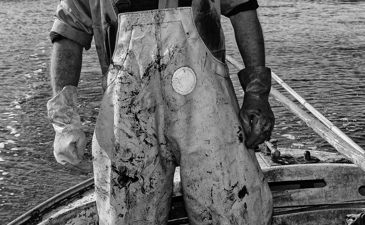 Matthias Nanz aus Schleswig ist einer der letzten Berufsfischer an der Schlei. Invasionen von Rippenquallen wie hier Im Spätsommer 2019 sind eine neue Herausforderung für ihn und seine Kollegen. Die Reusen sind mit Quallen verstopft. Der Fischfang kommt zum Erliegen. Mit großem Aufwand müssen die Reusen von den Quallenresten gereinigt werden. Die Arbeitskleidung zeigt die Spuren des Kampfes gegen die Quellenpest.