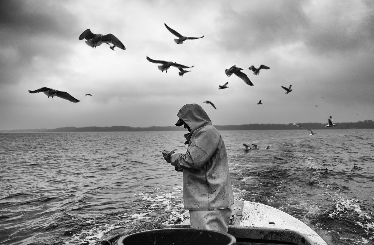 Matthias Nanz aus Schleswig ist einer der letzten Berufsfischer an der Schlei. Mit seinem Boot fährt Matthias Nanz vom Liegeplatz in Missunde zu den Fanggründen in der Schlei. An diesem kalten Fangtag Mitte Dezember gingen vor allem Heringe ins Netz. Hungrige Möwen umfliegen das Boot, während Matthias Nanz seine Heringe bei voller Fahrt schlachtet.
