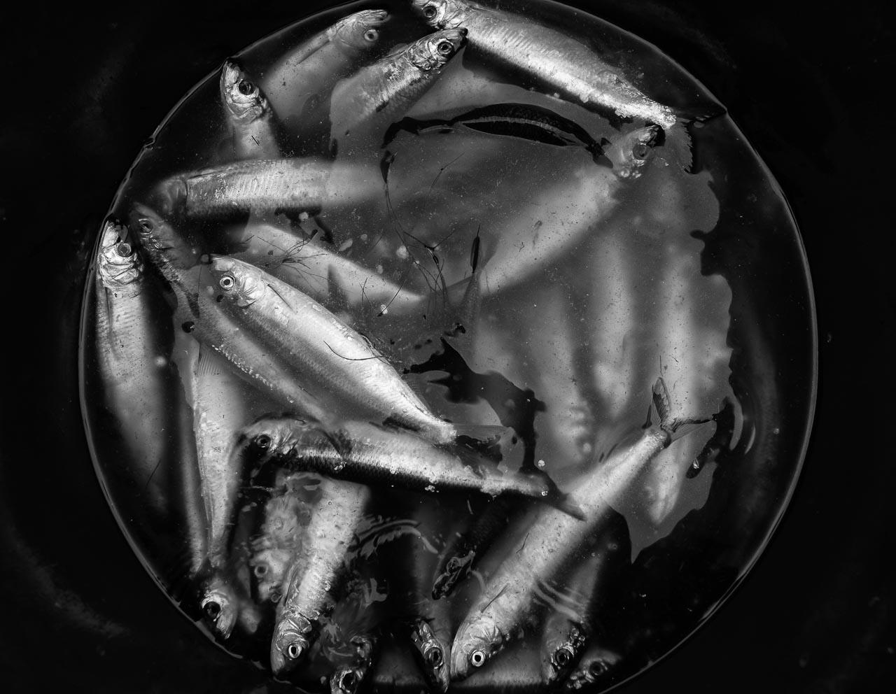 Matthias Nanz aus Schleswig ist einer der letzten Berufsfischer an der Schlei. Mit seinem Boot fährt Matthias Nanz vom Liegeplatz in Missunde zu den Fanggründen in der Schlei. An diesem kalten Fangtag Mitte Dezember gingen vor allem Heringe ins Netz.