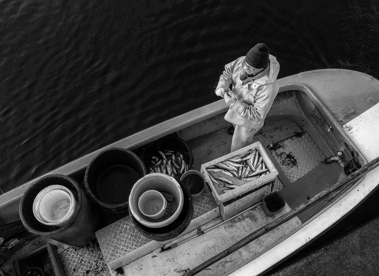 Matthias Nanz aus Schleswig ist einer der letzten Berufsfischer an der Schlei. Mit seinem Boot fährt Matthias Nanz vom Liegeplatz in Missunde zu den Fanggründen in der Schlei. An diesem kalten Fangtag Mitte Dezember gingen vor allem Heringe ins Netz. Sie wurden schon an Bord ausgenommen.