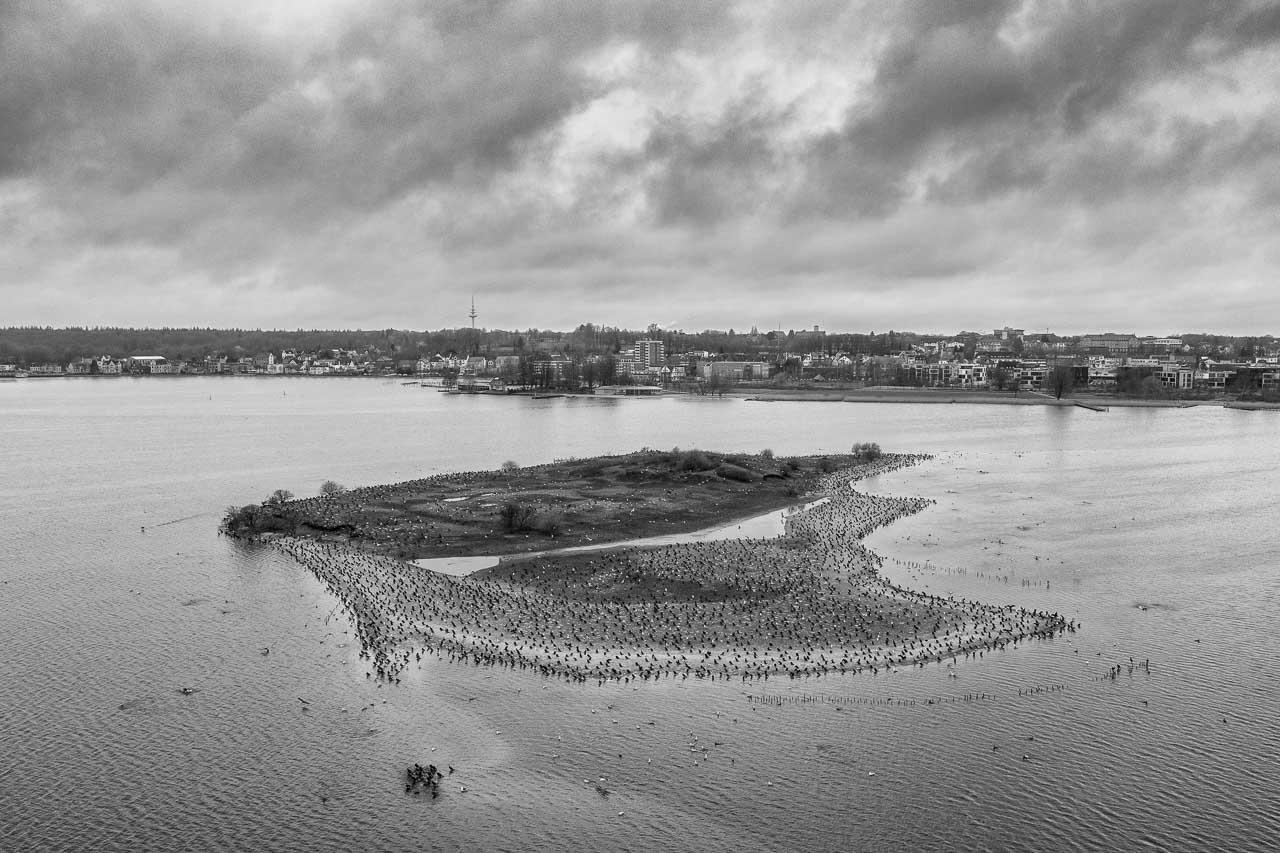 Ende Februar 2020 haben sich unzählige Kormorane auf der Möweninsel in der Schlei in Sichtweite der Stadt Schleswig versammelt. Die bei den Fischerrn gefürchteten schwarzen Vögel nutzen die Insel als Stützpunkt für ihre Jagd nach Heringen und anderen Schleifischen.