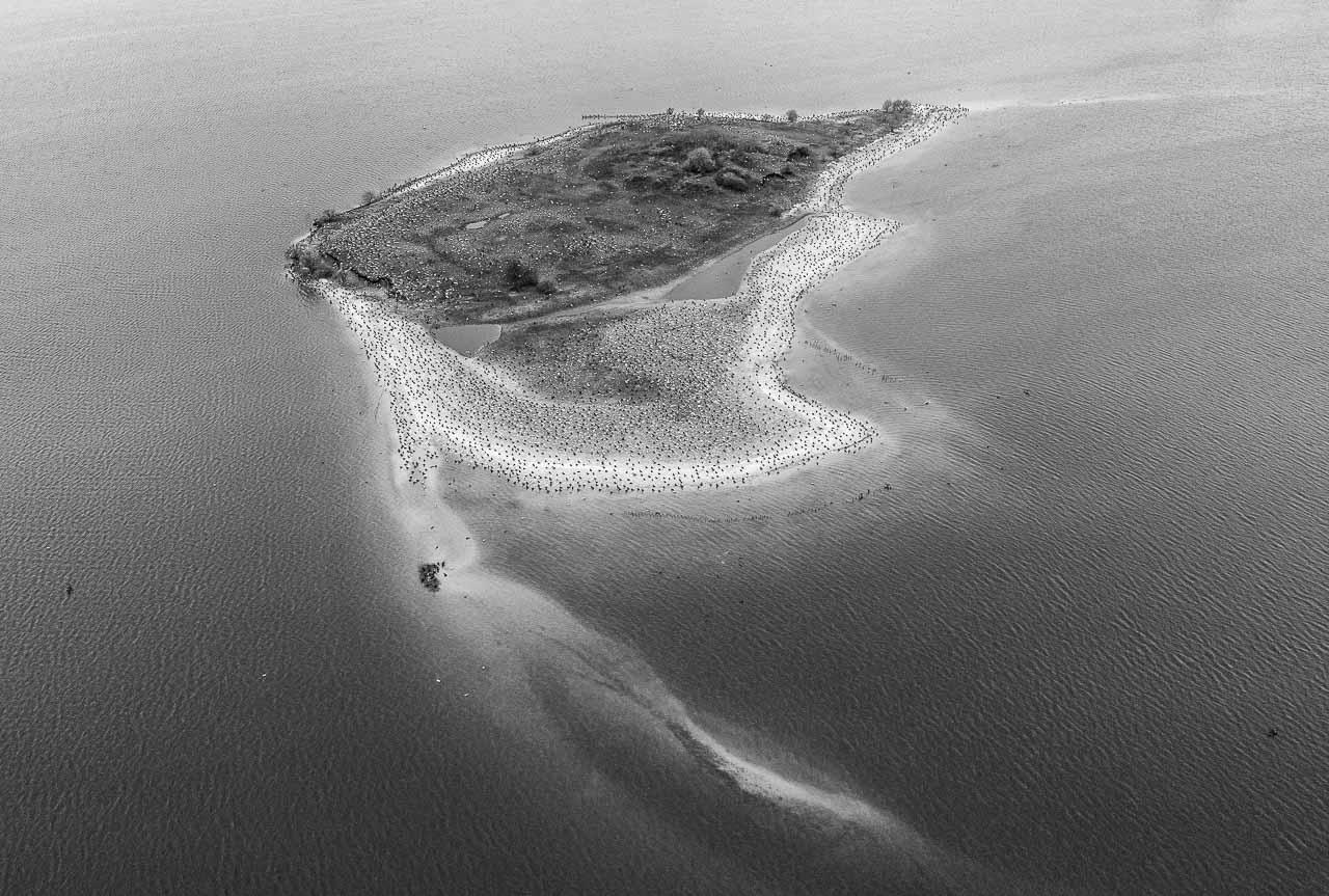 Ende Februar 2020 haben sich unzählige Kormorane auf der Möweninsel in der Schlei in Sichtweite der Stadt Schleswig versammelt. Die bei den Fischern gefürchteten schwarzen Vögel nutzen die Insel als Stützpunkt für ihre Jagd nach Heringen und anderen Schleifischen.
