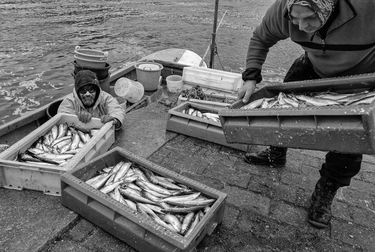 Matthias Nanz aus Schleswig ist einer der letzten Berufsfischer an der Schlei. Mit seinem Boot fährt er vom Liegeplatz in Missunde zu den Fanggründen in der Schlei. Im zeitigen Frühjahr werden vor allem Heringe gefangen. Der Fang geht direkt nach der Landung an Privatkunden, überwiegend aber - wie hier im Bild - an Fischhändler.