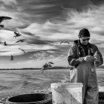 Matthias Nanz aus Schleswig ist einer der letzten Berufsfischer an der Schlei. Bei seinen Fangfahrten - hier Ende April auf der Großen Breite der Schlei - sind hungrige Möwen häufige Begleiter, immer in der Hoffnung auf Fischabfälle wie in diesem Fall Innereien ausgenommener Heringe.