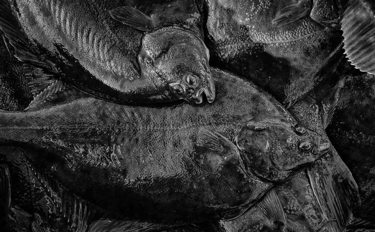 Der Herbst ist die Zeit, in der die Fischer an der Schlei Raubfische, Heringe und Flundern (Struvbutt) fangen. Das Bild zeigt Flundern in der Fischkiste des Schleifischers Matthias Nanz.