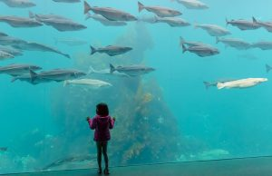 Der Atlantikpark, westlich der norwegischen Stadt Ålesund gelegen, ist eines der größten Salzwasser-Aquarien Nordeuropas. Die Meeresfische in den großen Becken beeindrucken vor allem Kinder wie dieses kleine Mädchen.