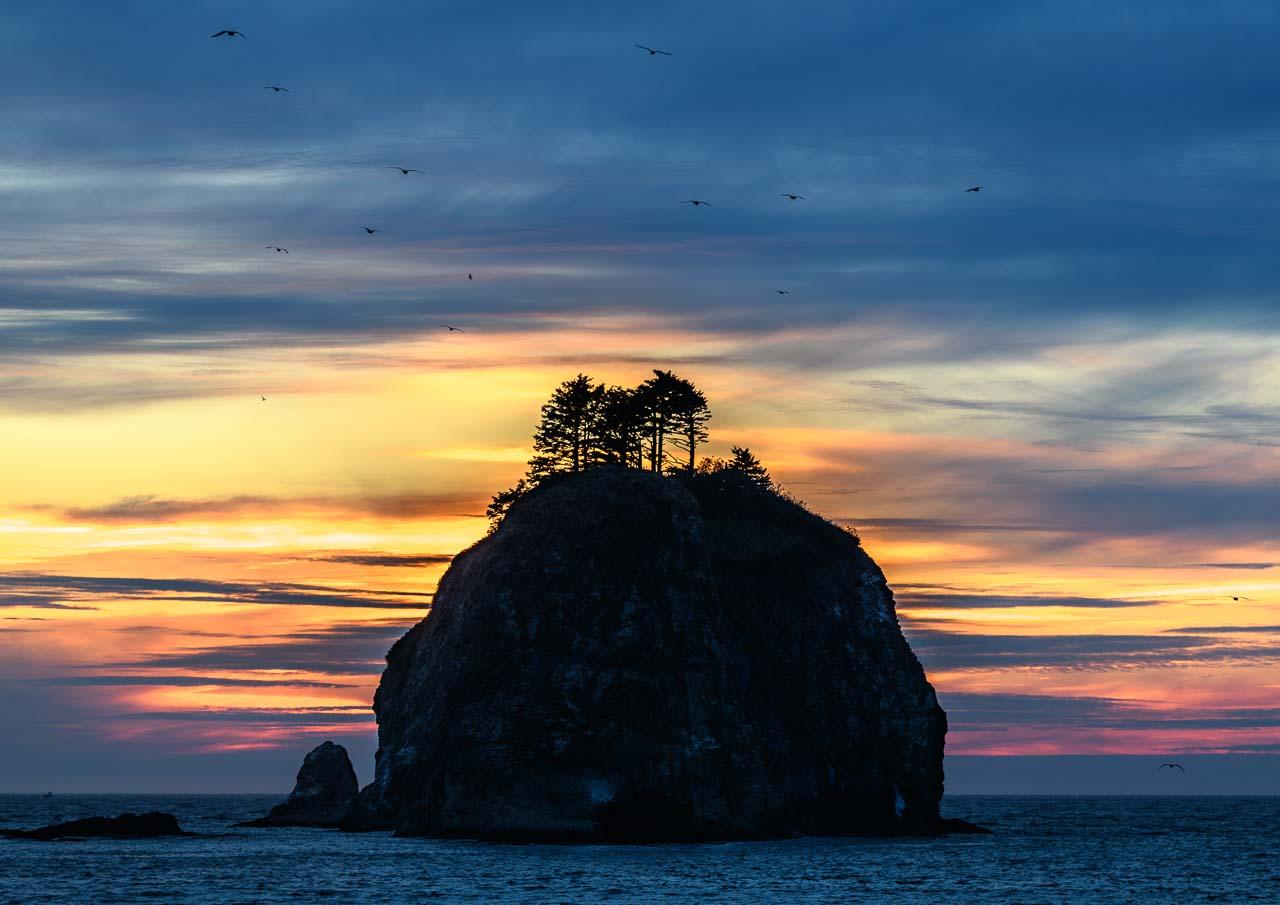 Little James Island im Abendlicht, umkreist von einem Möwenschwarm. Dieser bewaldete Felsen liegt vor der Küste von La Push, einer Siedlung in der Quileute Indian Reservation auf der Olympic-Halbinsel im US-Bundesstaat Washington.
