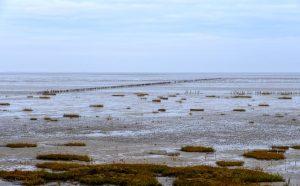 Stille im Watt: Blick vom Römö-Damm (Rømødæmningen) auf die Landschaft im Nationalpark dänisches Wattenmeer