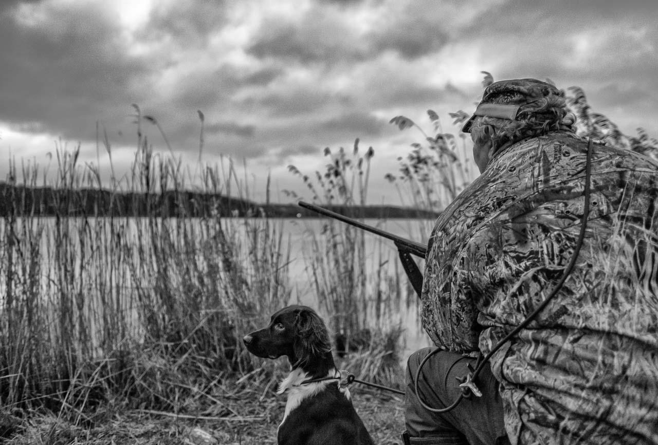 Szenen einer Jagd: Ein Jäger und sein Kleiner Münsterländer warten auf Wildenten und Gänse zu Beginn einer Bewegungsjagd in Schleswig-Holstein im Dezember 2018.