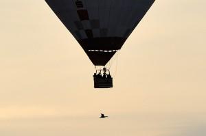 Wildgans begegnet Heißluftballon © Holger Rüdel www.holger-ruedel.de