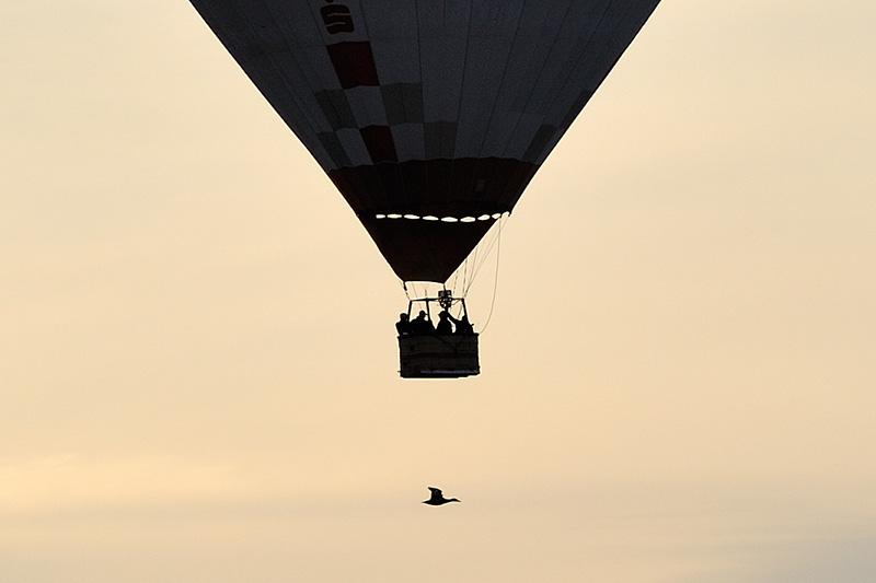 Wildgans begegnet Heißluftballon © Holger Rüdel